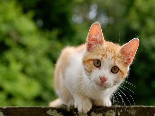 Nên làm gì khi mèo vào nhà